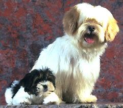 Imagem do site da revista Cães e Cia
