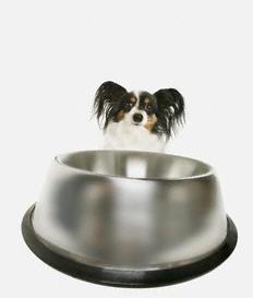 Cachorro pequeno no pote de ração.