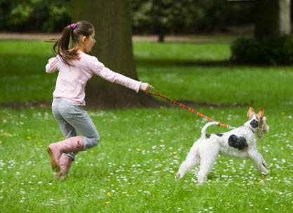 42 21176536 - Dicas para um passeio tranquilo com seu pet