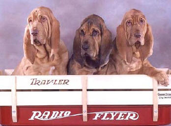 Imagem do site SHERICK'S BLOODHOUNDS