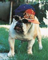 Imagem extraída do site Bulldogs Italia