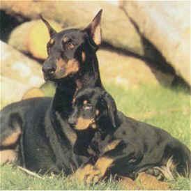 Foto da revista Animais e Cia