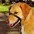 gentleleader - Dicas para um passeio tranquilo com seu pet