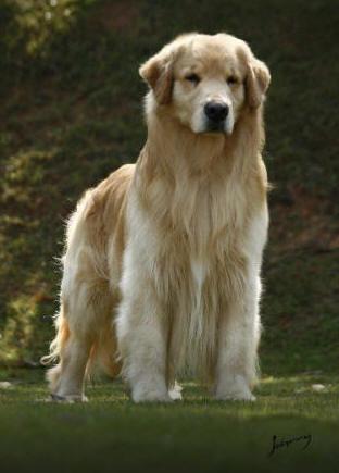 Dog Times Dicas Para Criar Bem Seu Cachorro Educação E Adestramento