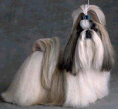 Dog Times Dicas Para Criar Bem Seu Cachorro Educa 231 227 O E